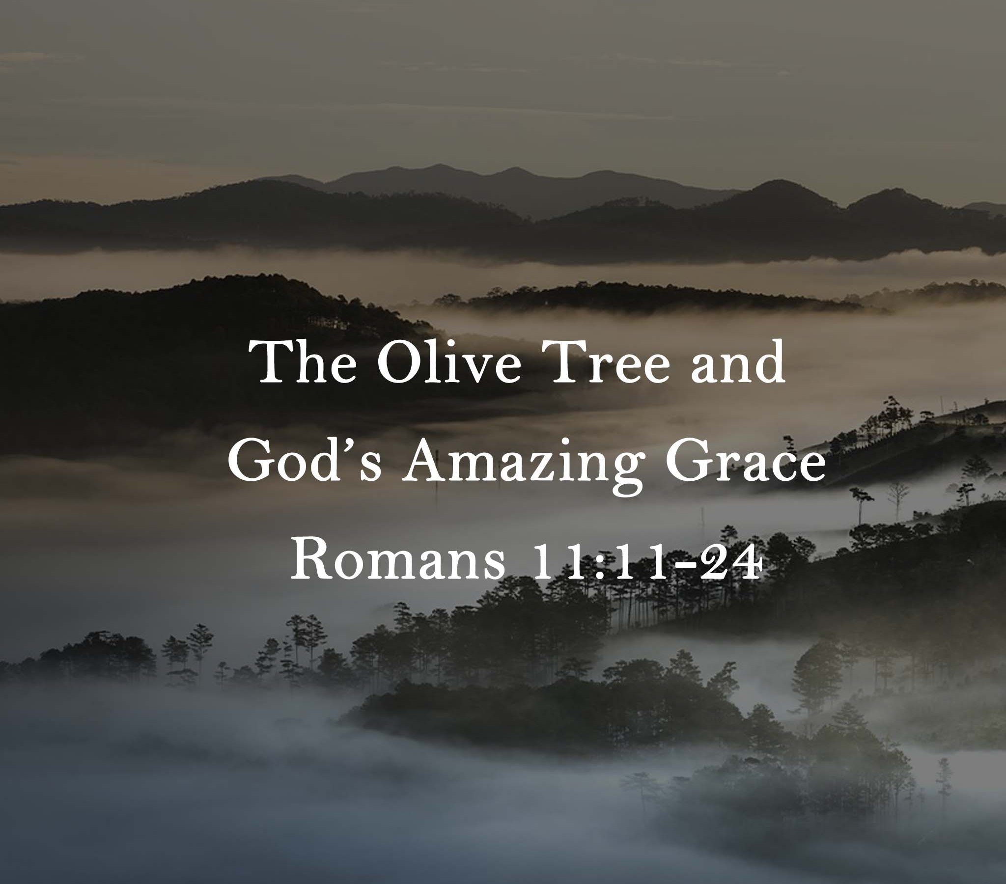 Sermon:The Olive Tree and God's Amazing Grace Romans 11:11-24